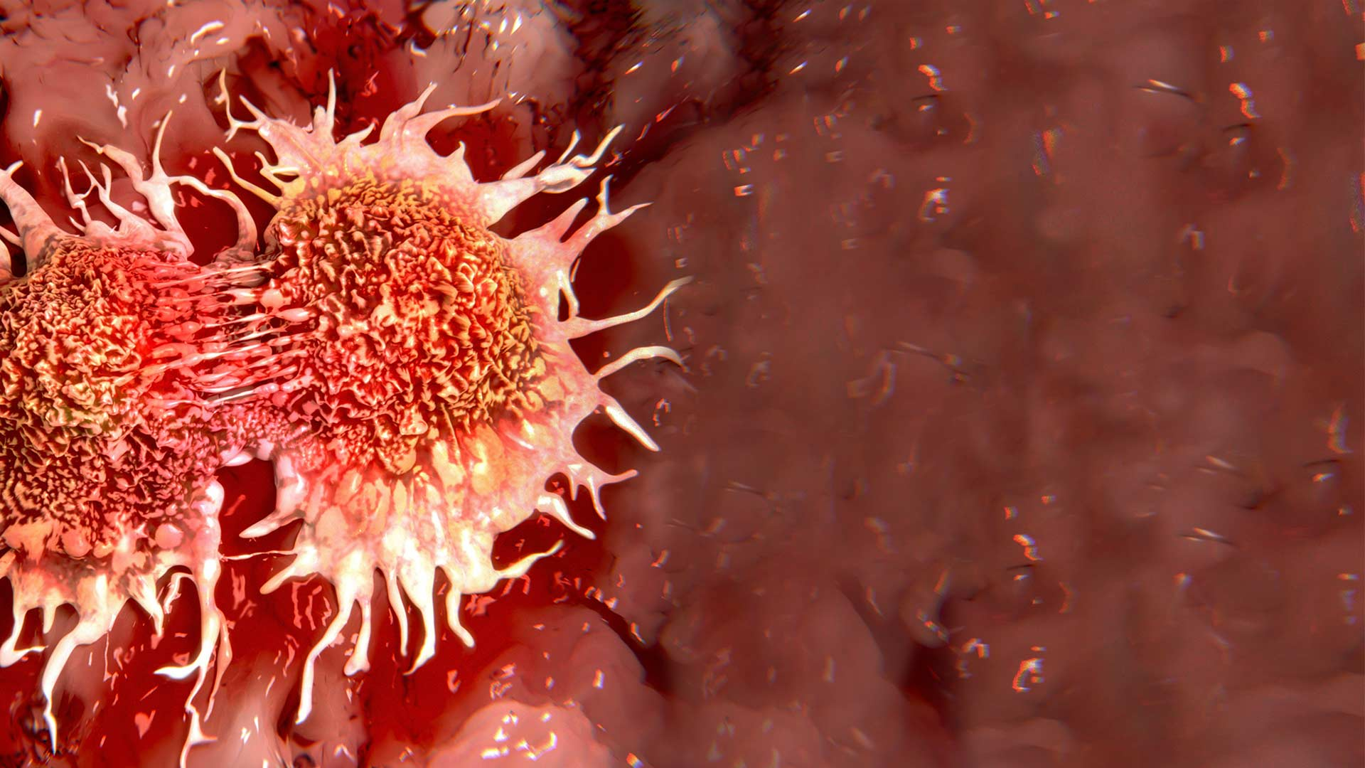 Discovery of angiogenesis