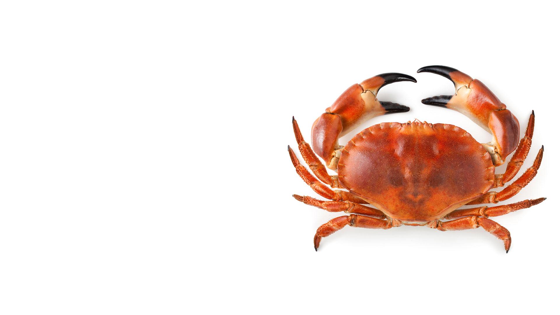 واژه سرطان علاوه بر یک صورت فلکی، معادل لاتین برای خرچنگ است.