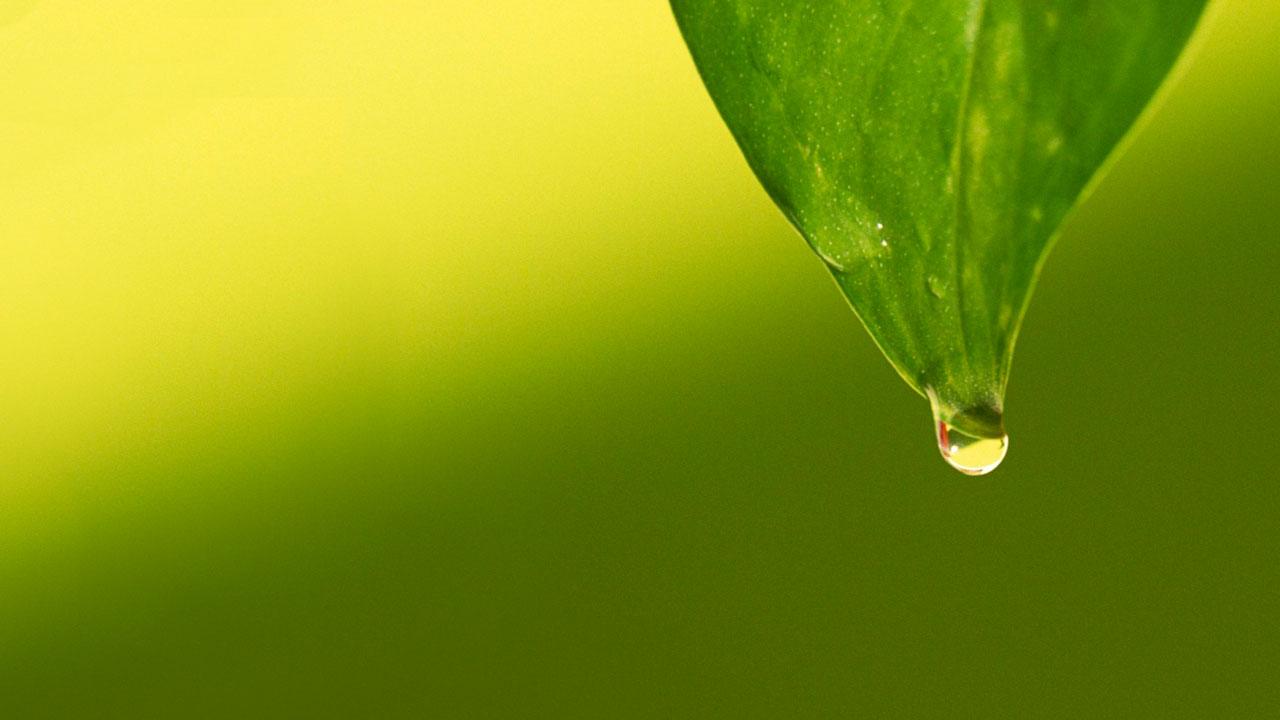 Auszeichnungen und Anerkennung für herausragende Nachhaltigkeit