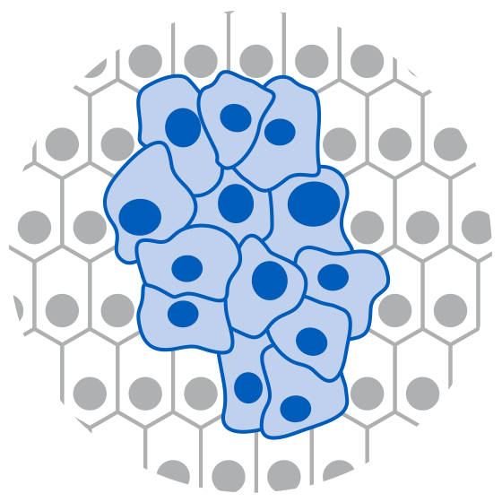 Increased or uncontrolled cell proliferation