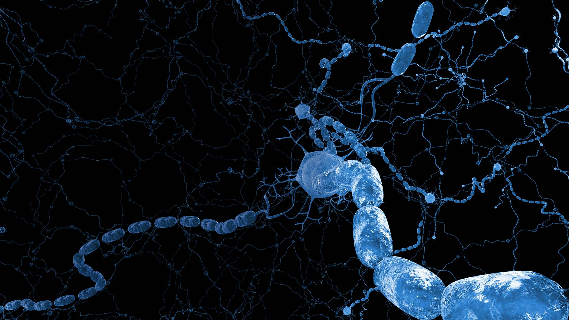 The discovery of myelin