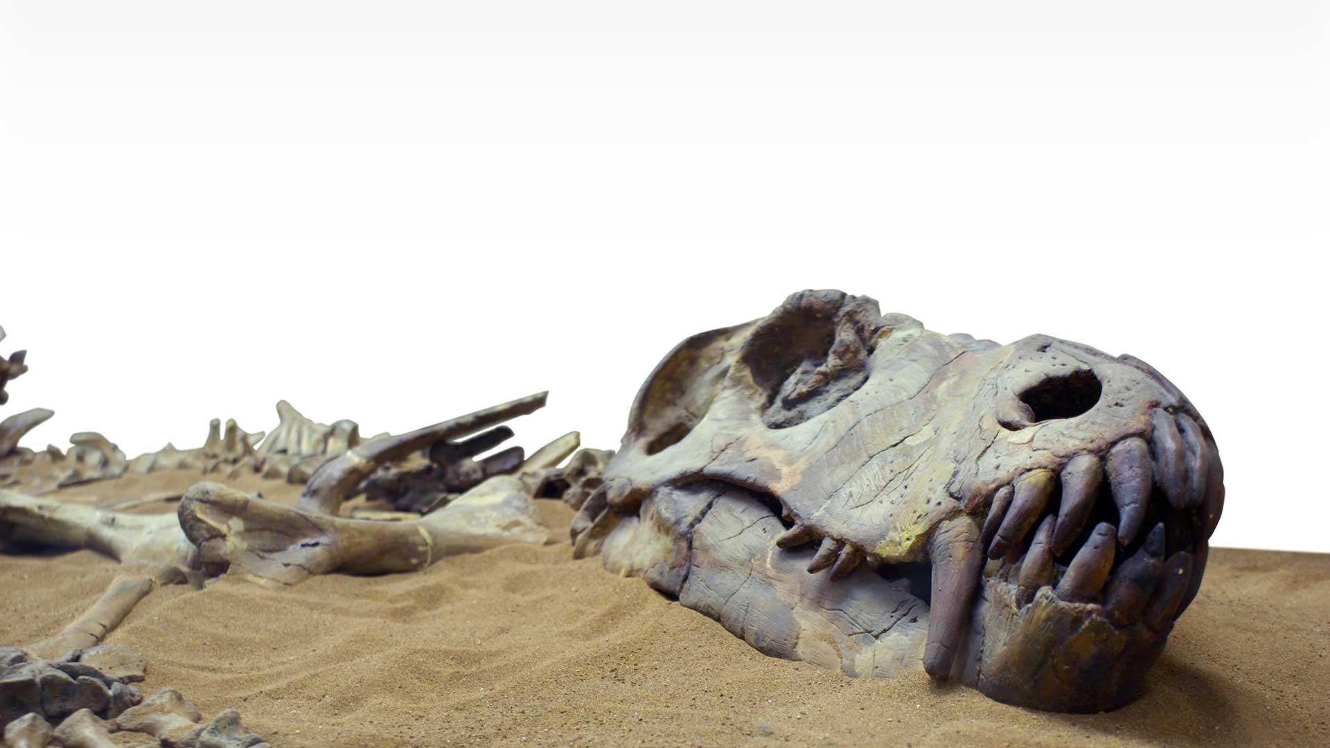 دایناسورها نیز به سرطان مبتلا بودند